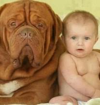 Preslatko: Veliki psi i bebe vlasnici