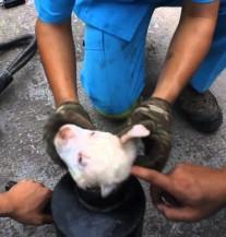 Svaka čast: Pogledajte kako su radnici spasili psića zaglavljenog u cijevi