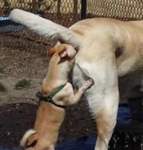 Ne guraj nos gdje ne treba! (POSTER)