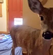 Dva nezvana gosta ušla u kuću, vlasnici se ISTOPILI OD SREĆE! (VIDEO)