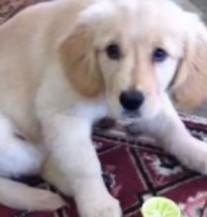 Ona je probala po prvi put limun i njena reakcija je presmiješna! (VIDEO)