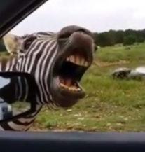 Pokušajte se ne nasmijati: Video koji će vam uljepšati dan (VIDEO)